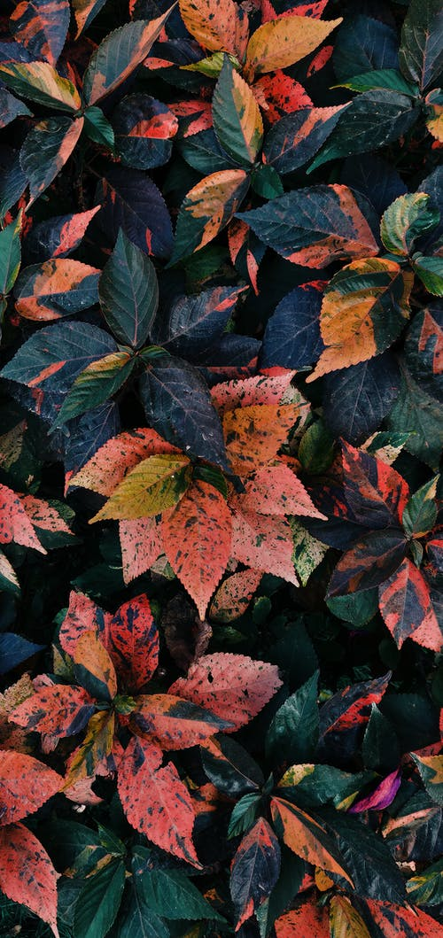 Free stock photo of #earth#leaves#shotonphone#nature#vsco