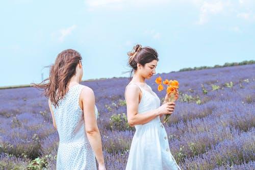 Gratis stockfoto met bloeien, bloeiend, bloemen, bloemenveld