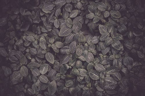 Photo of Dark Green Leaves