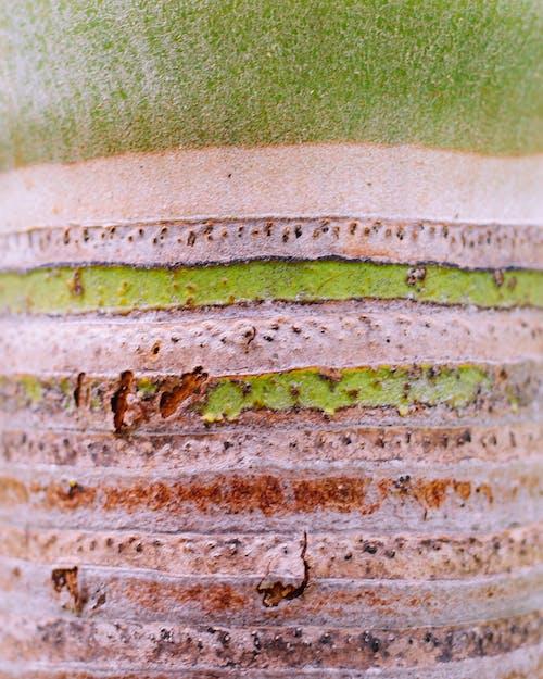 Ingyenes stockfotó absztrakt, fa, karib-szigeteki, pálmafa témában