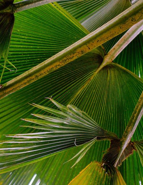 Ingyenes stockfotó fák, karib-szigeteki, levelek, pálmafák témában