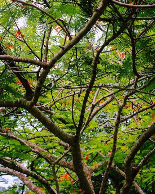 Ingyenes stockfotó erdő, fák, természet, zöld témában