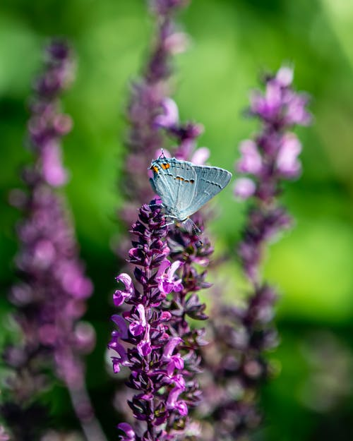 Free stock photo of insect, moth, purple
