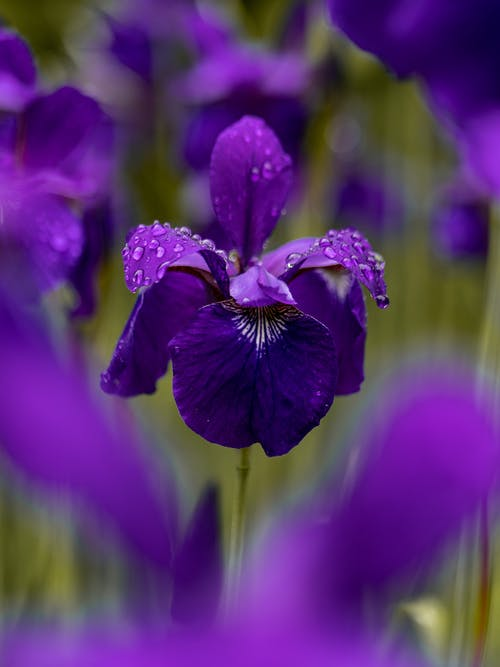 Selective Focus Photography Purple-petaled Flower on Field
