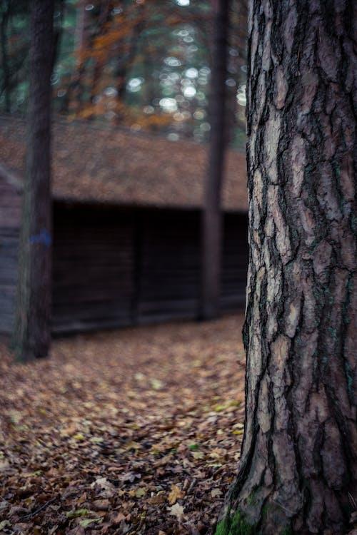 Free stock photo of autumn, bokeh, close-up