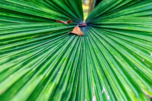 Close-up Photo of Green Palm Plant Leaf