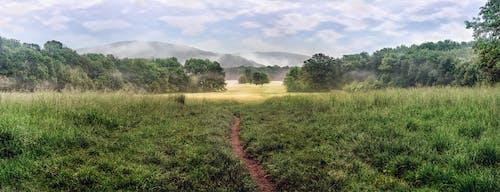 Foto stok gratis agrikultura, alam, awan, bidang