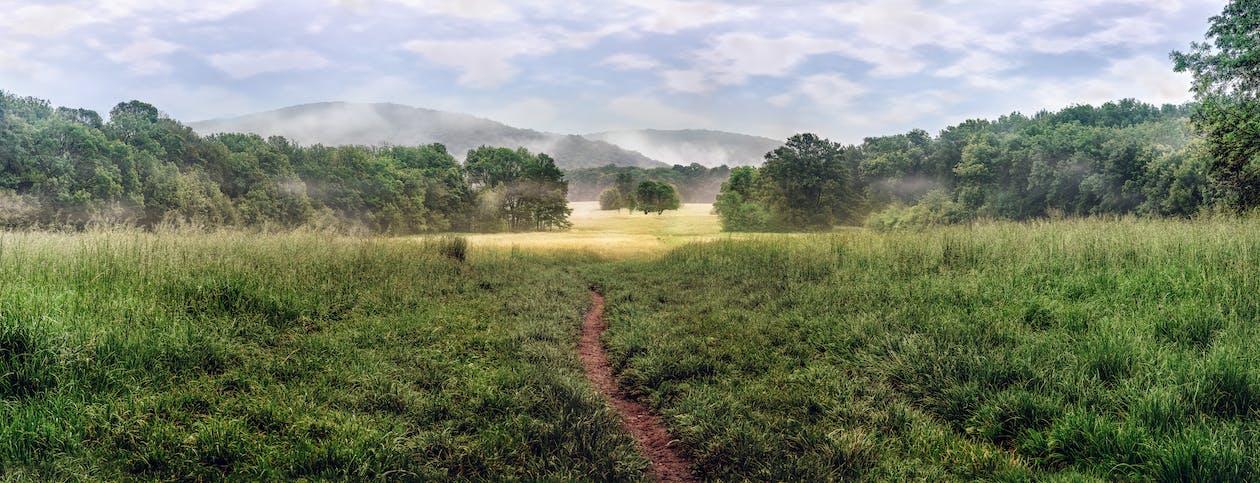 Narrow Aisle Between Grass Field