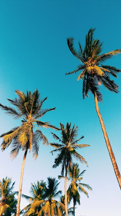Low Angle Photography of Palm Trees Under Clear Blue Sky