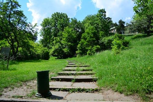Бесплатное стоковое фото с ботанический сад, лестница, природа