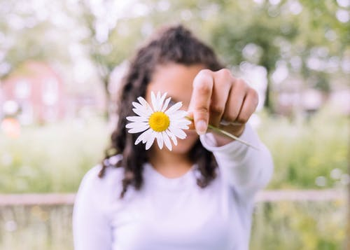 Photo of Person Holding White Daisy