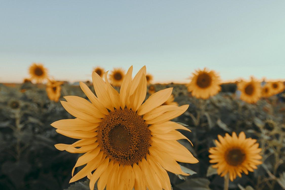 꽃, 꽃 바탕화면, 꽃 배경화면