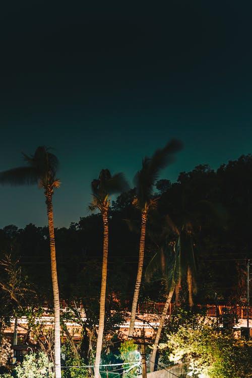 Immagine gratuita di albero di cocco, bellezza nella natura, città, città di notte