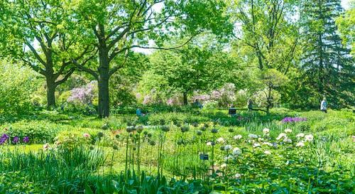 Gratis lagerfoto af botaniske haver, grøn, montreal, natur