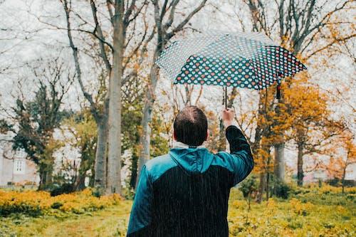 Gratis lagerfoto af afslapning, blad, efterår, folk