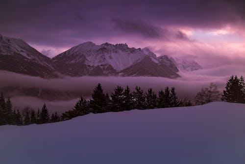 Základová fotografie zdarma na téma hory, jehličnany, kopec, krajina