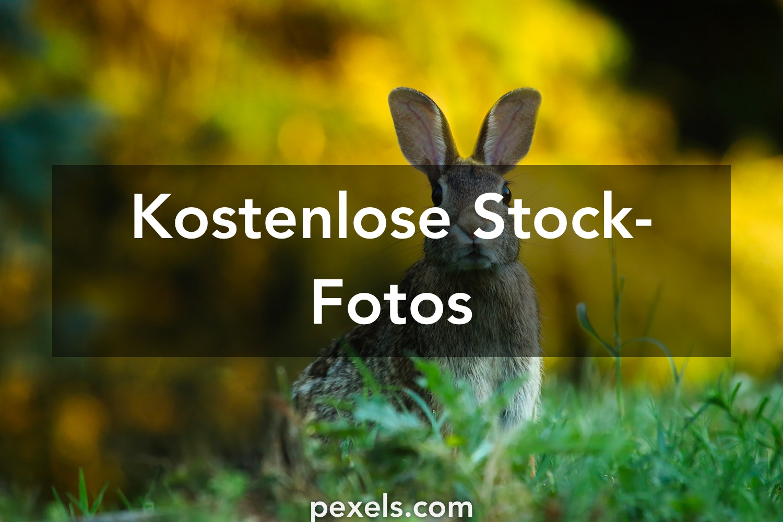 200 Hase Fotos Pexels Kostenlose Stock Fotos