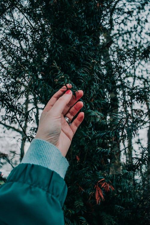 Gratis lagerfoto af berøring, blade, hånd, mørkegrøn