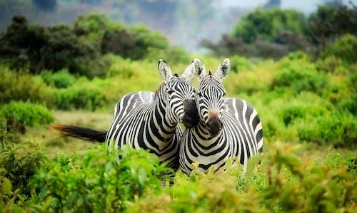 HDR, 保護, 公園, 動物園 的 免費圖庫相片