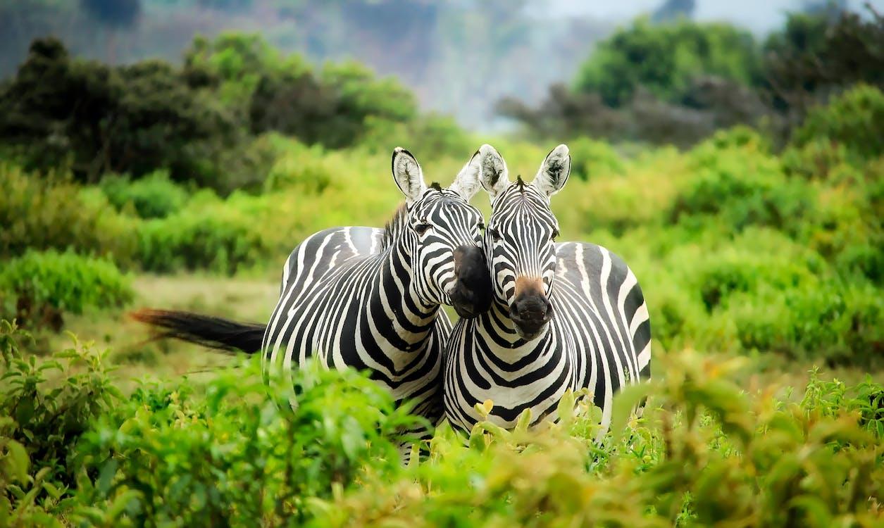 África, al aire libre, animales