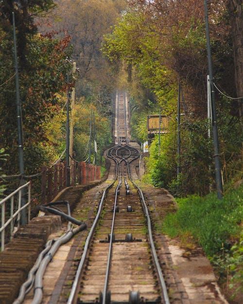 Photo of Train Track Near Trees