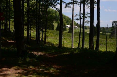 Fotobanka sbezplatnými fotkami na tému chôdza, kopec, les, slnečné svetlo