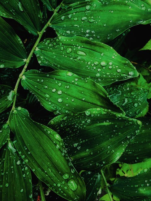 Close up photo of water drops on leaves