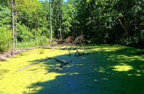 Imagine de stoc gratuită din apă, arbori, codru, crengi