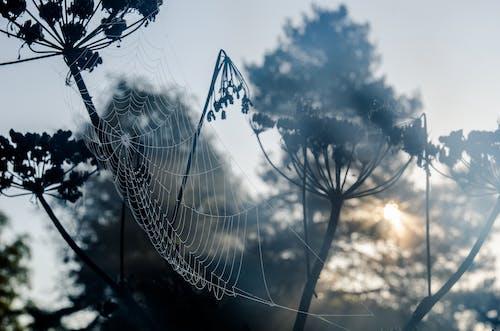 Immagine gratuita di alba, alberi, bellissimo, coperto