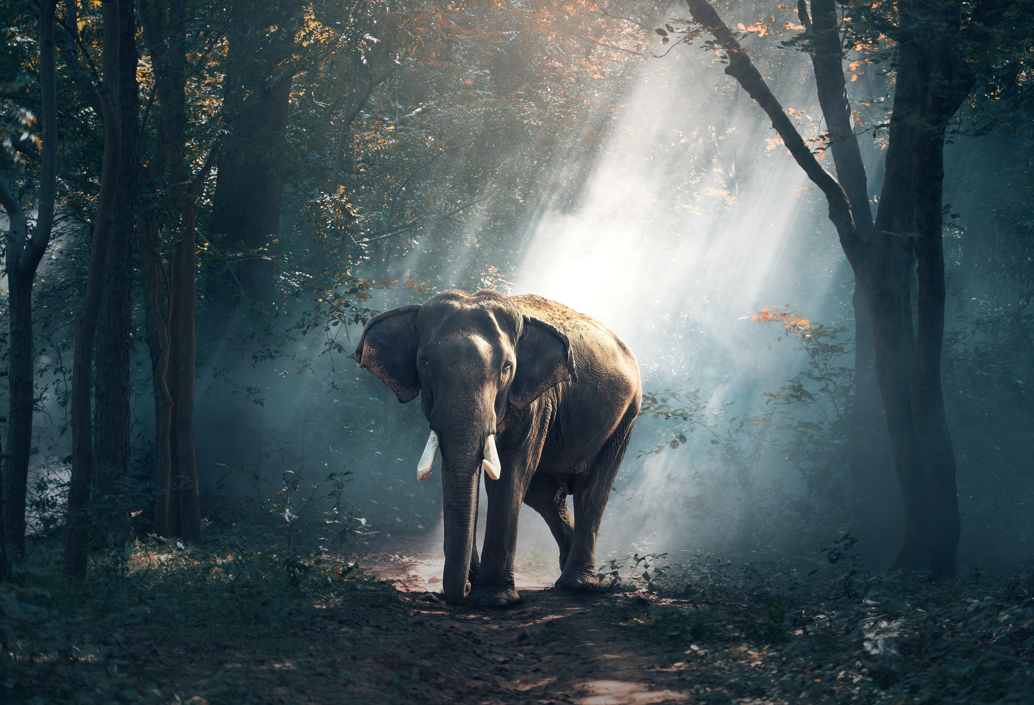 bäume, draußen, elefant