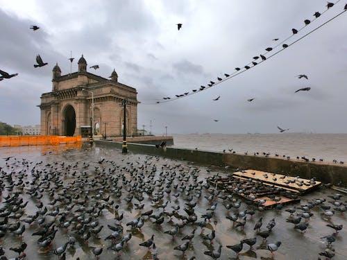 Foto profissional grátis de cst, passarinhos, pássaro