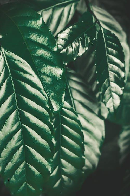 Free stock photo of dark green, eyeshadows, leaves, mobile wallpaper