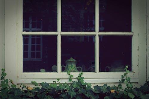 Darmowe zdjęcie z galerii z bluszcz, roślina, szklanka