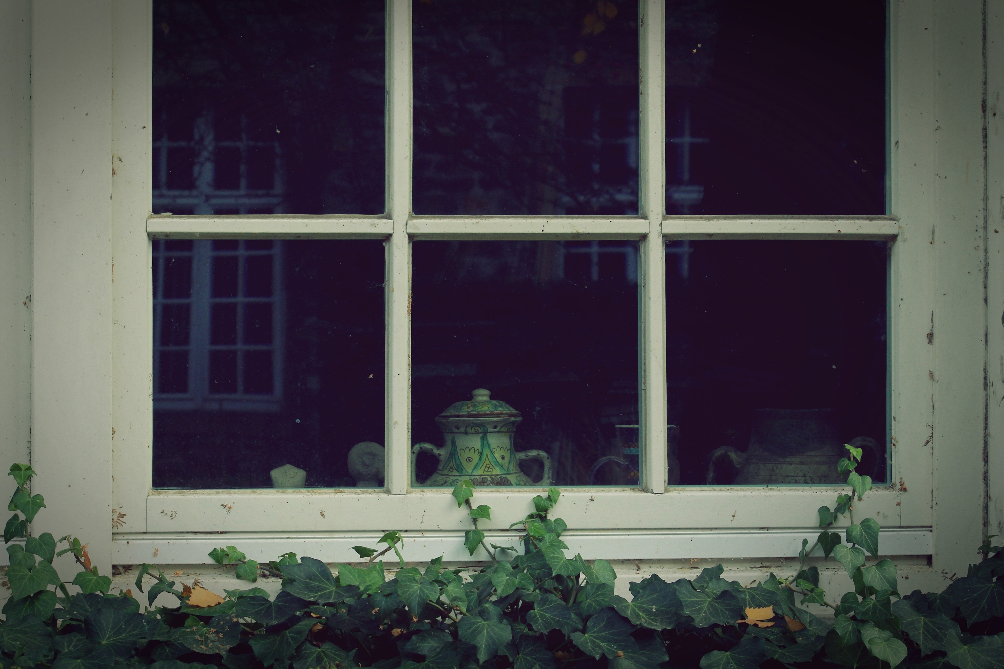 3 Closed Window Pane Slightly Covered With Green Vines At