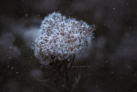 Close-up of Snow on Tree
