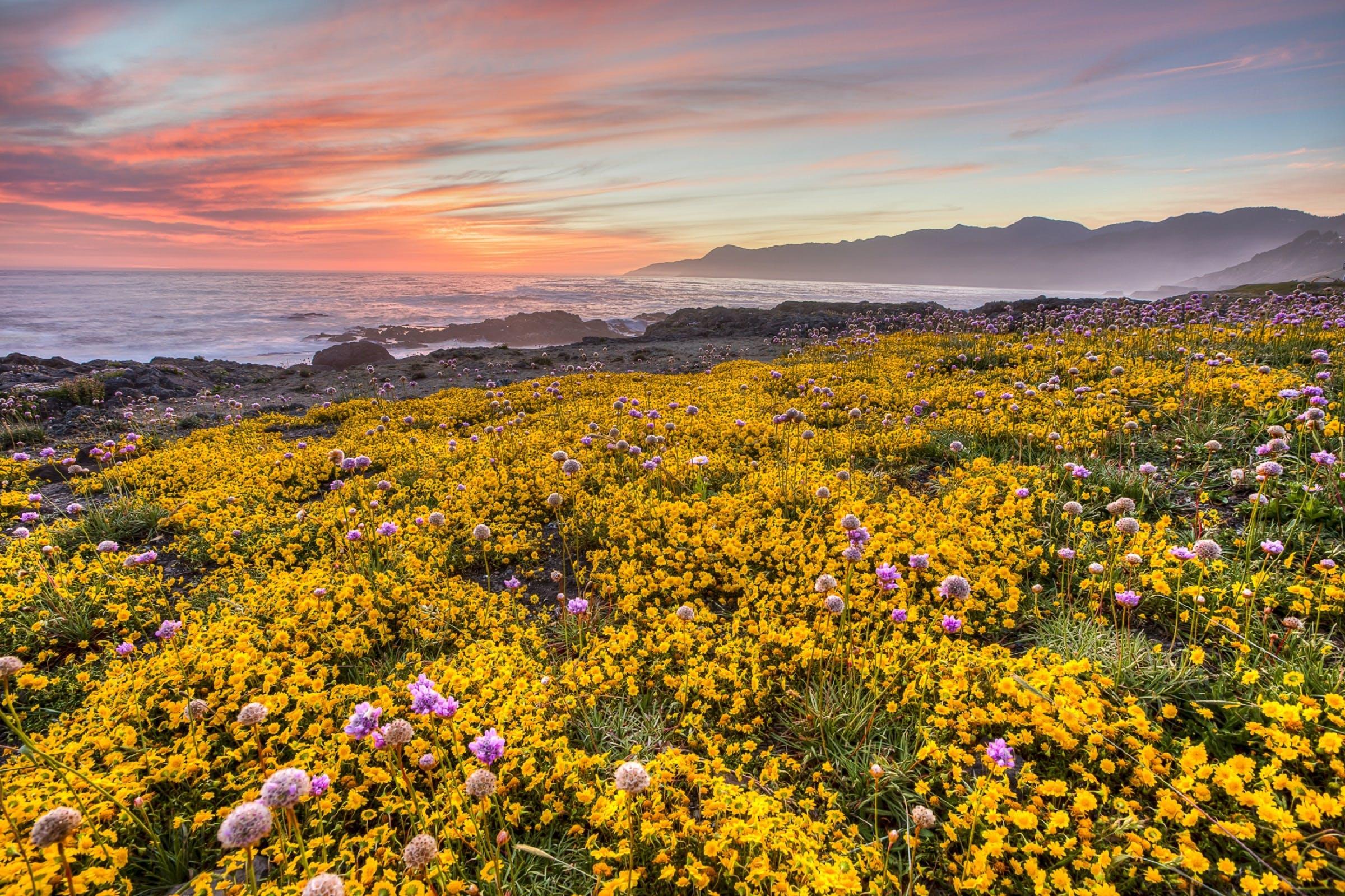 Ingyenes stockfotó felhőzet, fényes, festői, fű témában