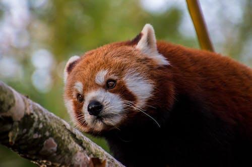 Бесплатное стоковое фото с вымирающие виды, глаза, дерево, животное