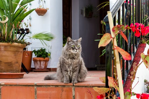 Photo of Gray Long-fur Cat on Floor Next to Potted Flowers