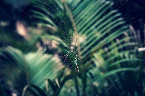 Foto profissional grátis de aracnídeo, aranha, arrepiante, cadeia