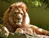 animal, big, fur