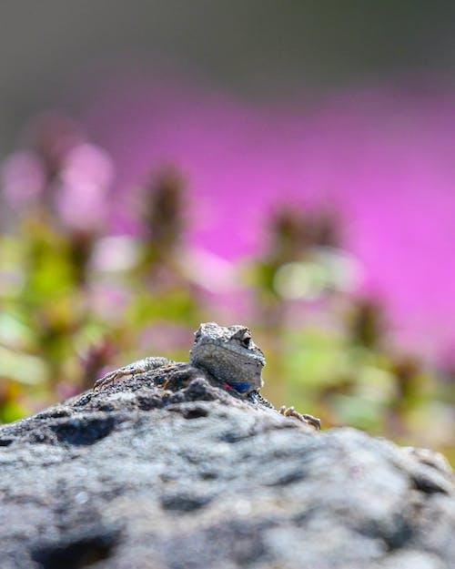 Selective Focus Photography of Iguana on Rock