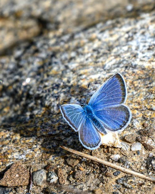 Free stock photo of blue, insect, moth