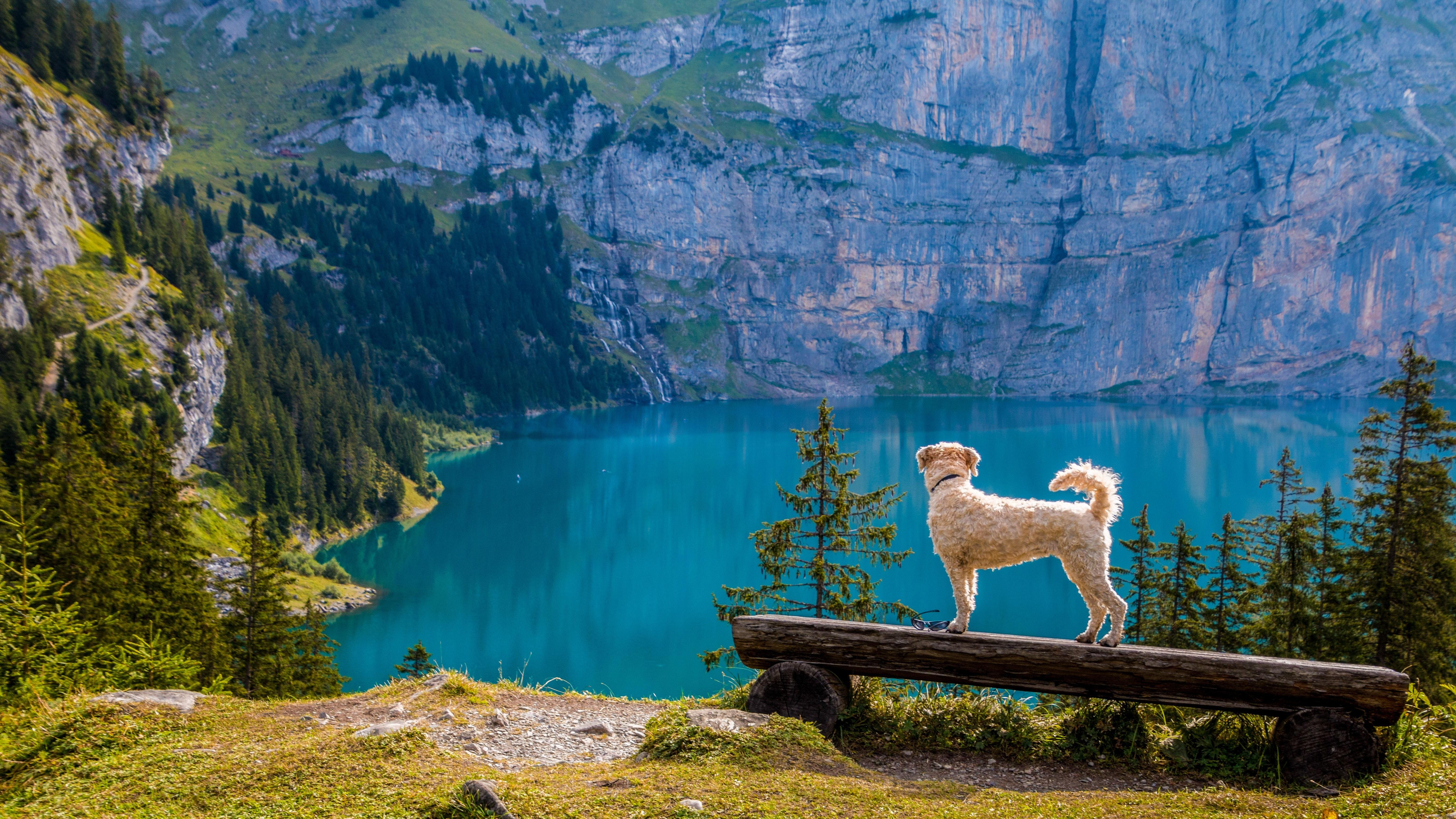 Swan on Lake Against Mountain