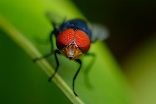 Macro Shot of Fly on Leaf