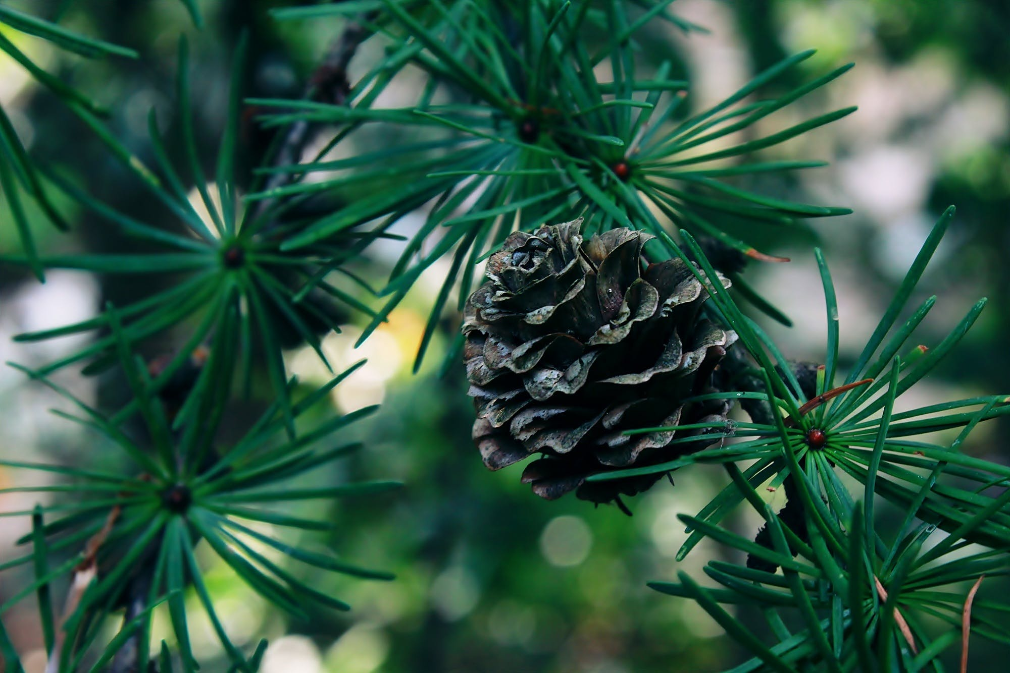 Kostenloses Stock Foto zu natur, wald, winter, pflanze