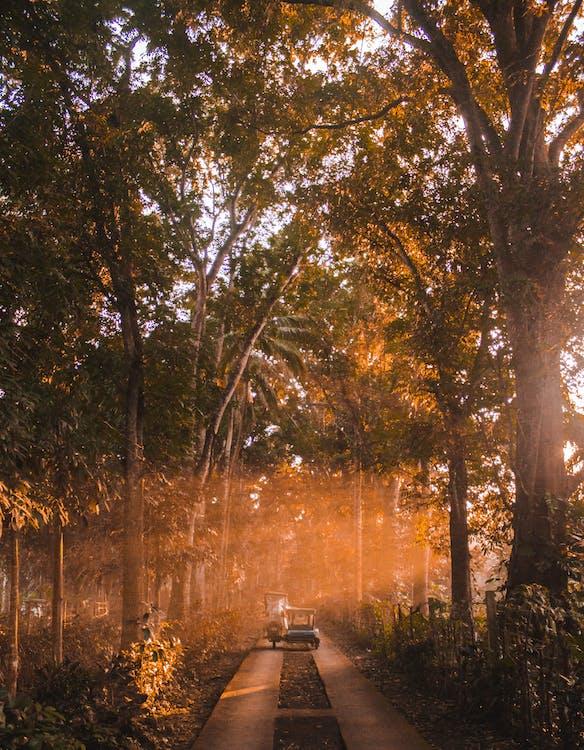 alberi, alberi alti, ambiente