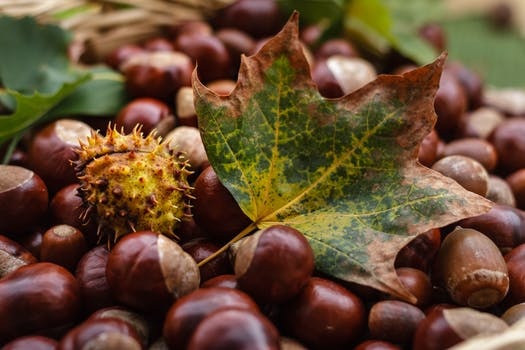 Donate Your Car >> Squirrel Eating Acorn · Free Stock Photo