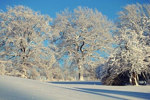 Gratis lagerfoto af forkølelse, frossen, frost, gren