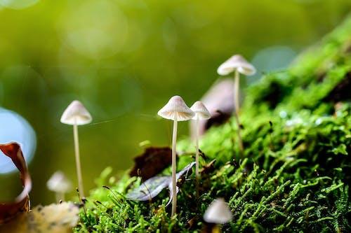 Gratis stockfoto met bloesem, champignons, close-up, daglicht