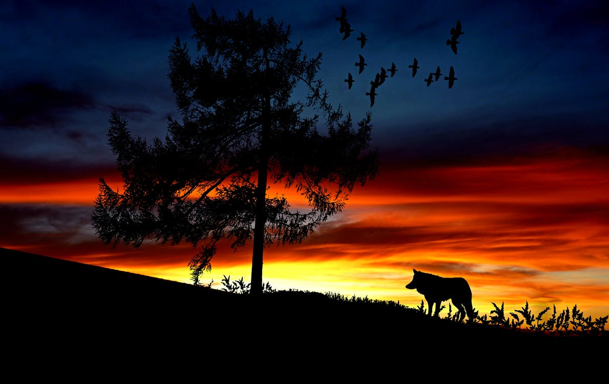Silhouette Dog on Landscape Against Romantic Sky at Sunset